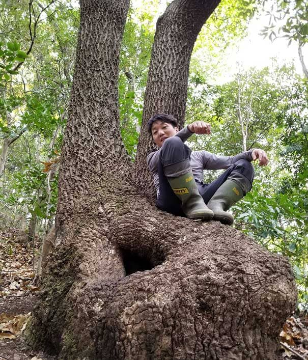 めずらしい樹形