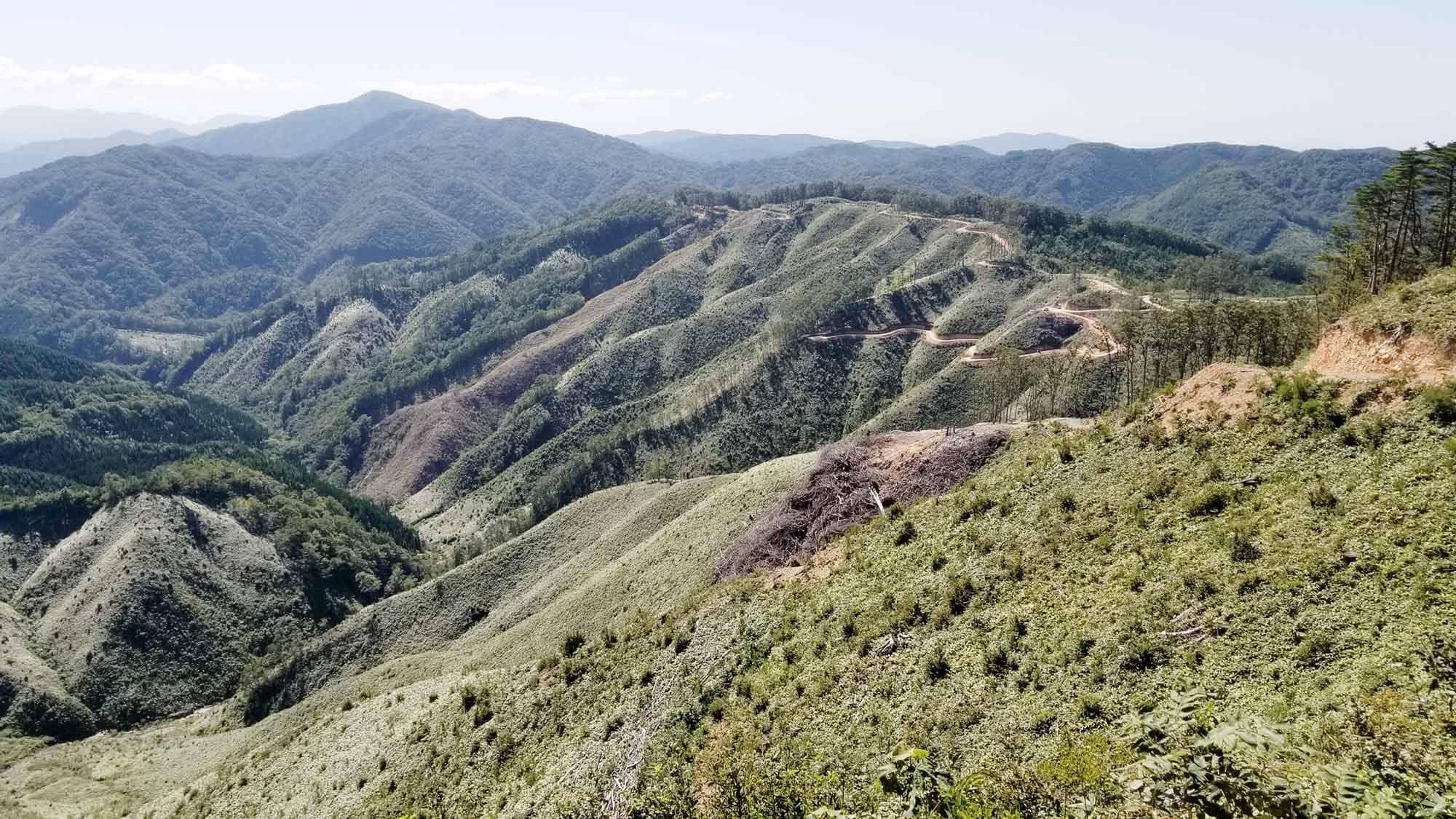 社有地の伐採地