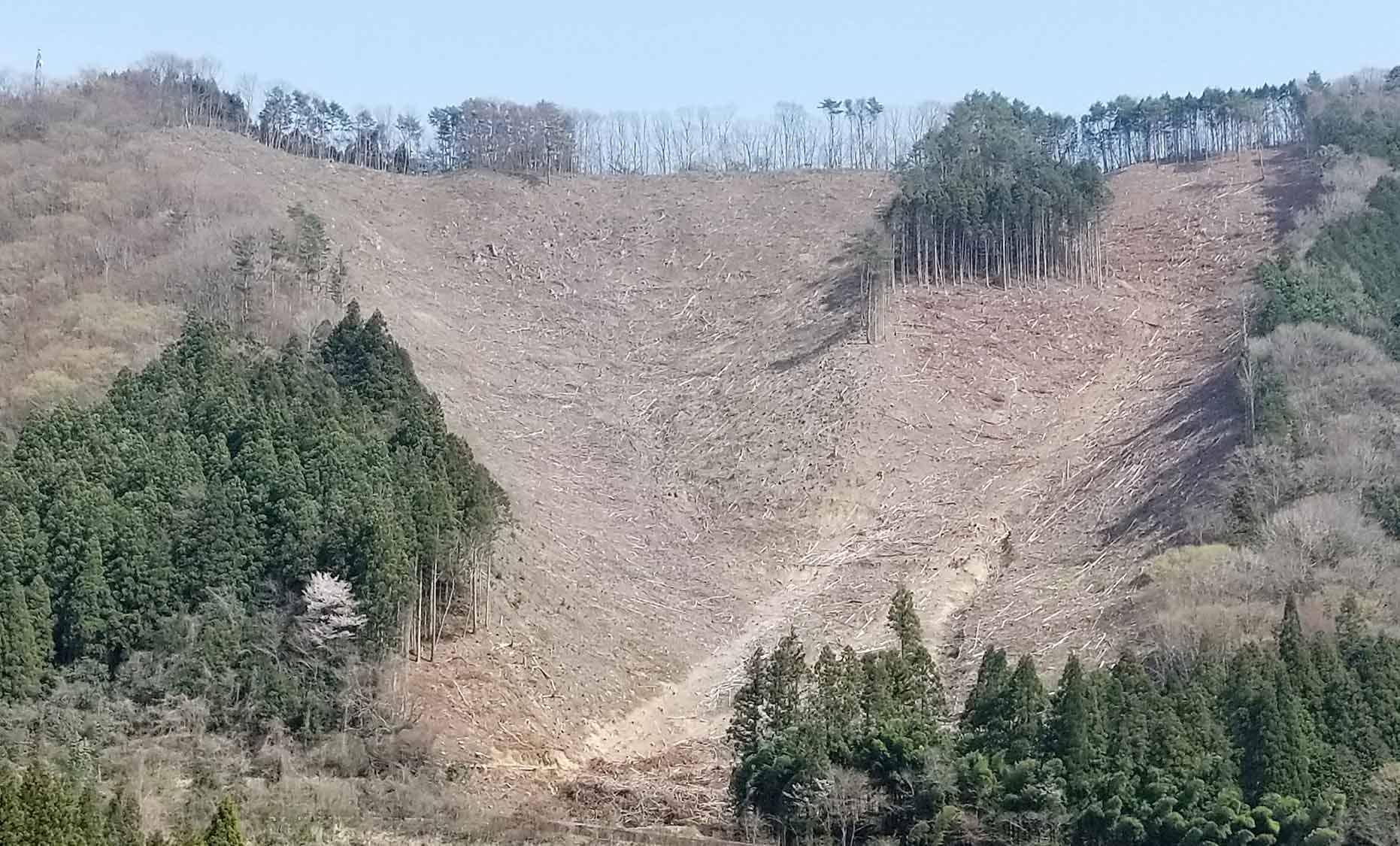吉賀町地内の伐採地